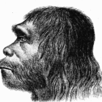 Homo nuclearensis